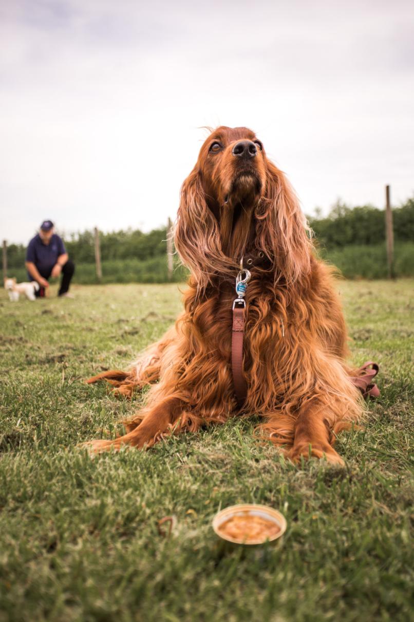 Erwachsene Hunde Expertengruppe Hundsamma